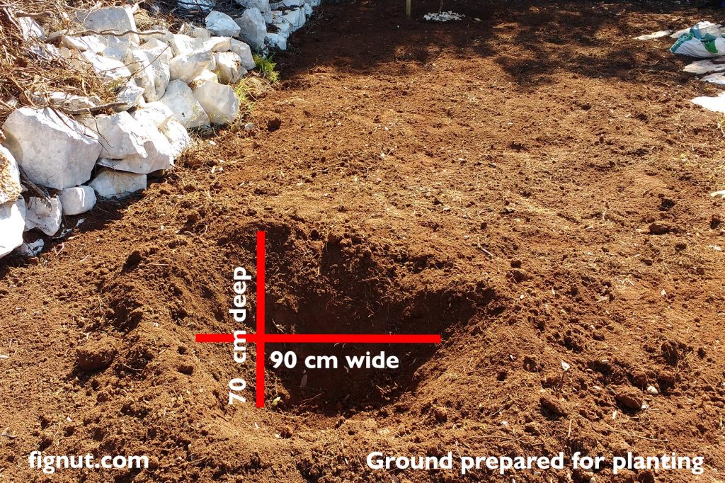 Ground with hole prepared for planting