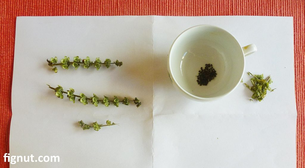 Buds and seeds with container and white paper