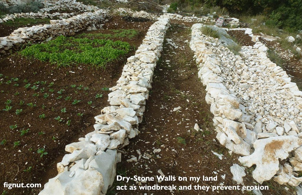 Dry-Stone Walls on my land act as windbreak and they prevent erosion