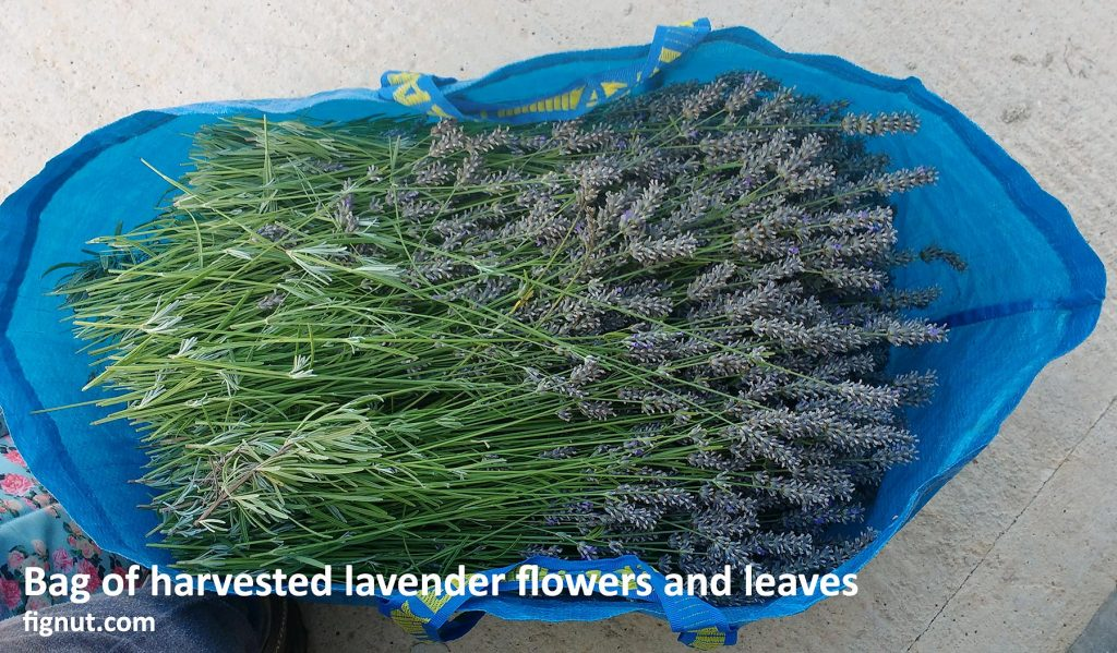 Lavender laid horizontally in a large, roomy bag to prevent the squeeze and damage to the flowers