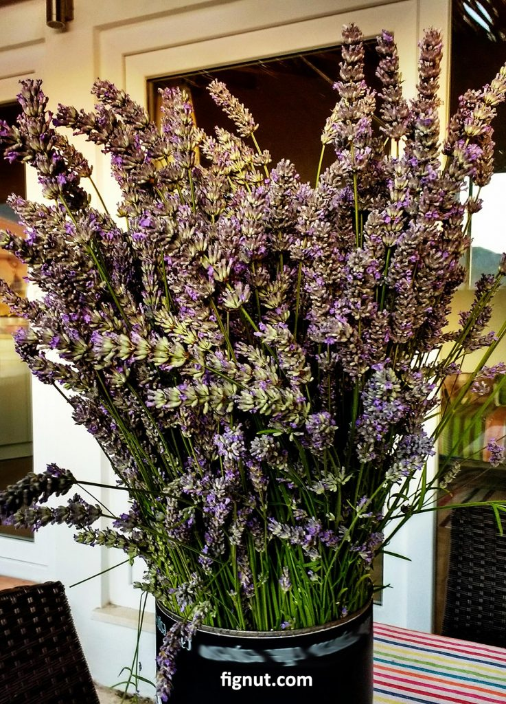 My freshly cut lavender