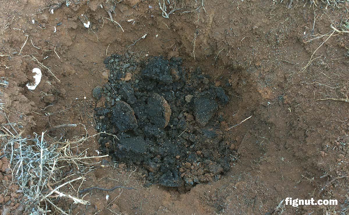 Fertilizer in the prepared hole