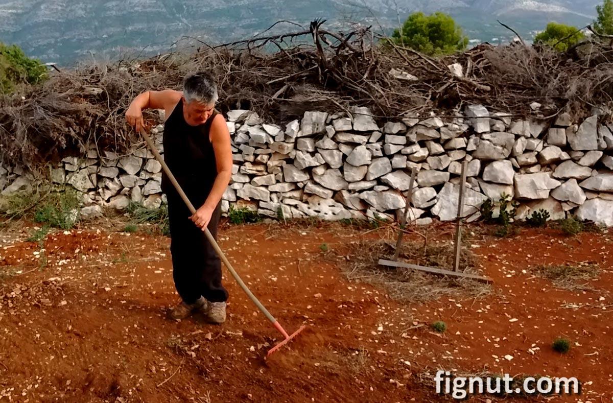 Preparing the ground where I'll plant my fig tree