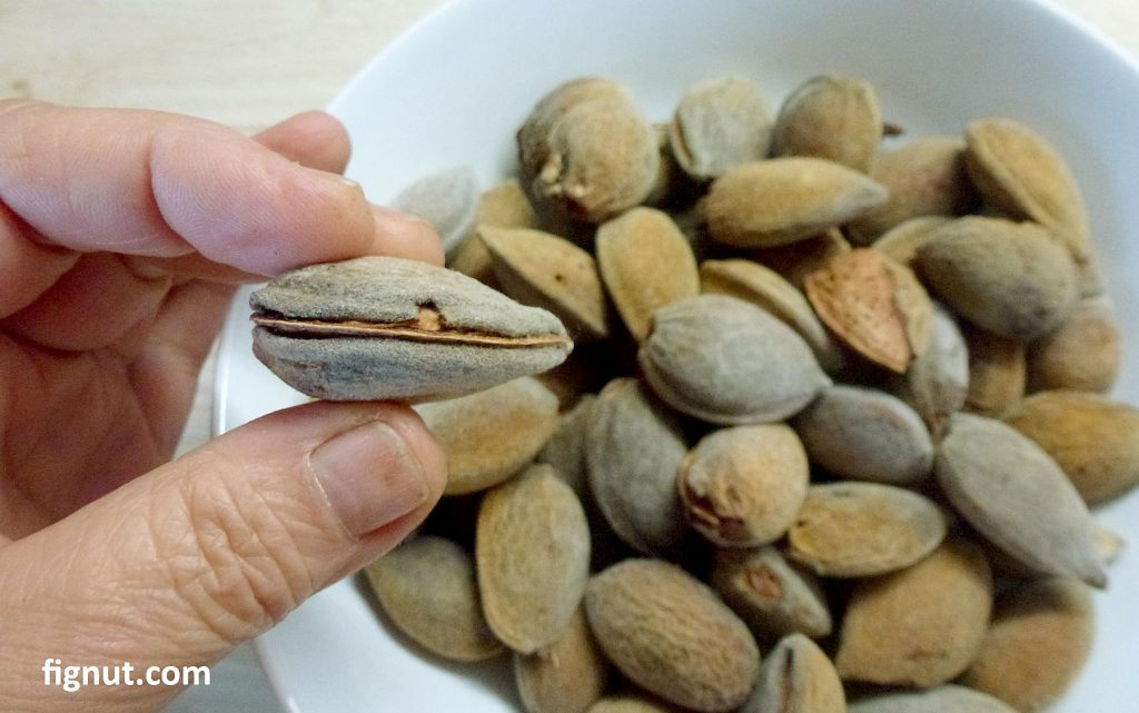 dried hull of the almonds