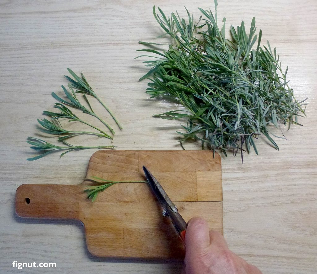 Use pruning shears to flatten the bottom bit of the stems