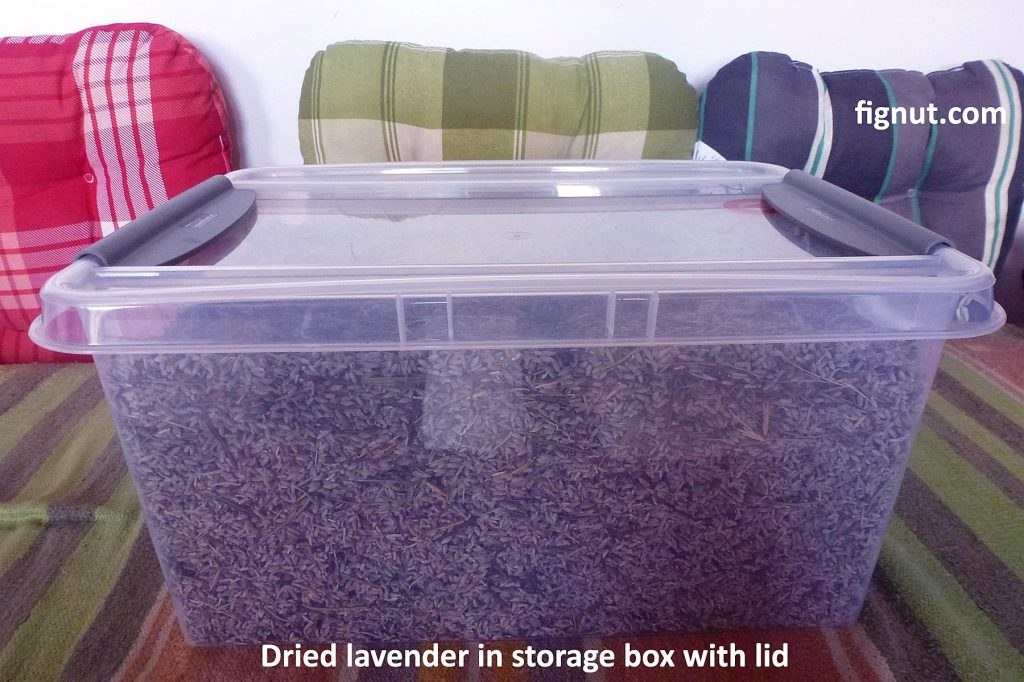Dried lavender in plastic storage box with lid