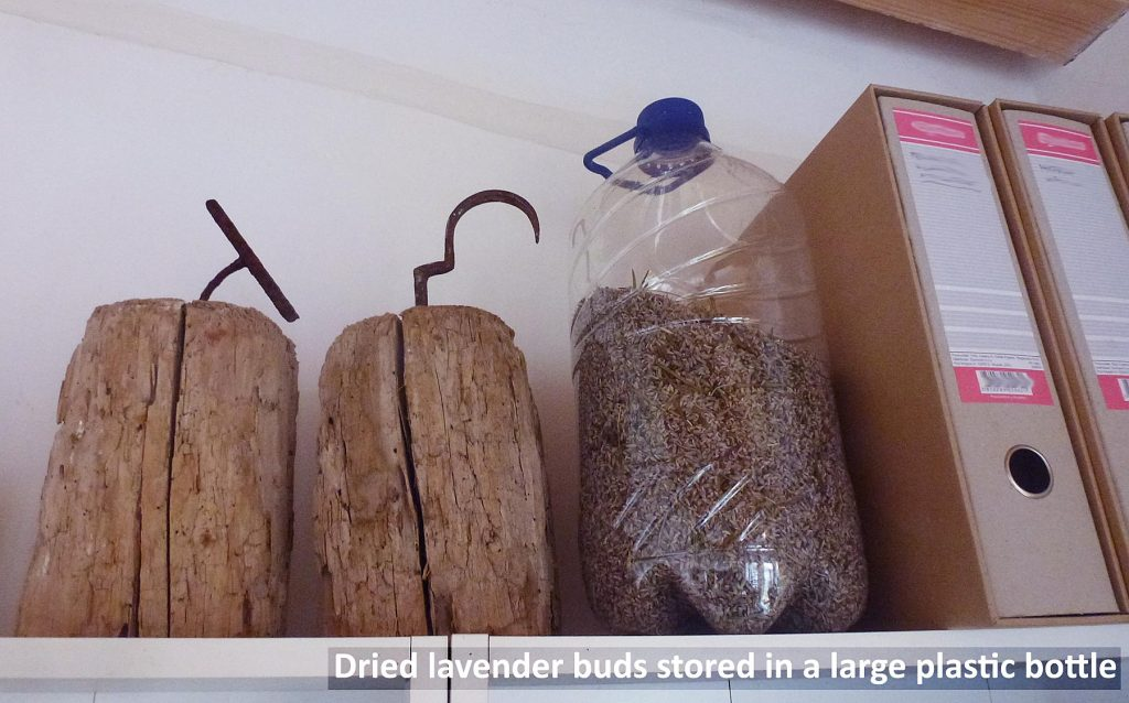 Dried lavender buds stored in large plastic water bottle