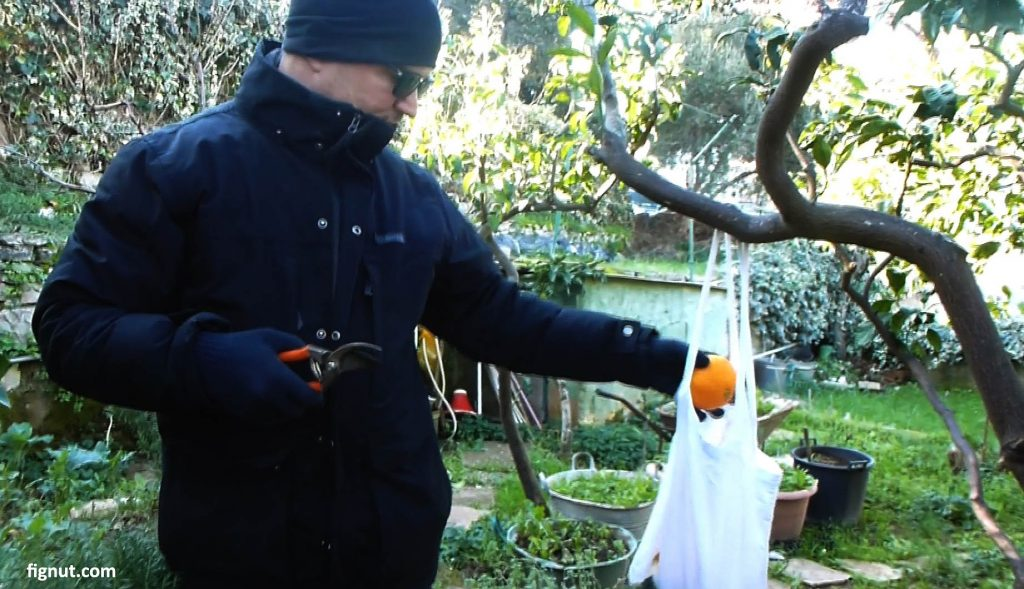 Keep the oranges in the clean cotton bag