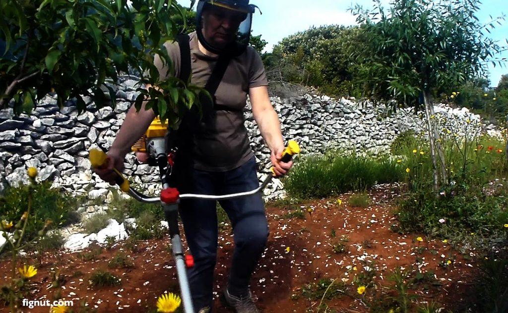 Tidying my overgrown garden