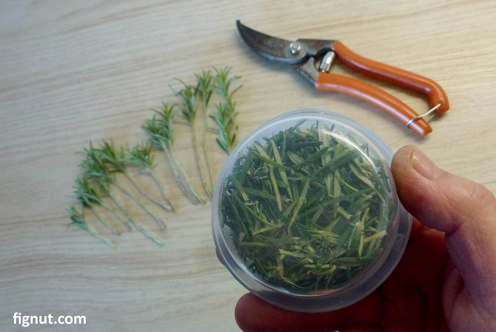 Save removed leaves in plastic container for later use