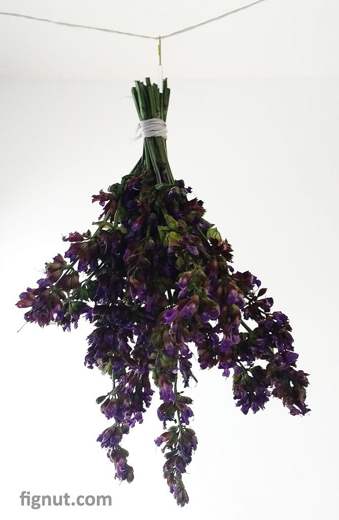 Drying sage flowers bouquet - hanging in the room