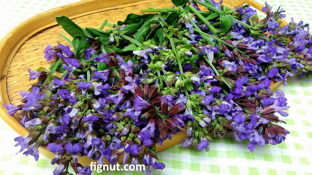 Sage flowers on the tray prepared for drying