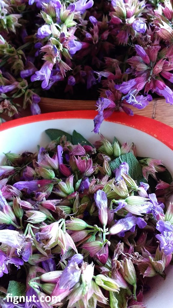 Lovely colours of the fresh sage flowers